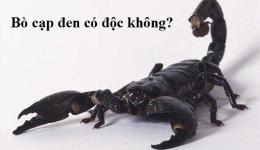 bo-cap-den-co-doc-khong